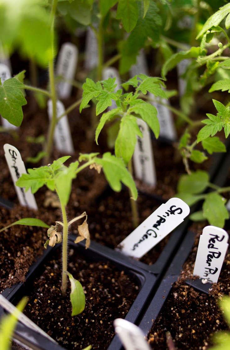 pollinate-vertical-seedlings-liesa-johannssen-gardenista