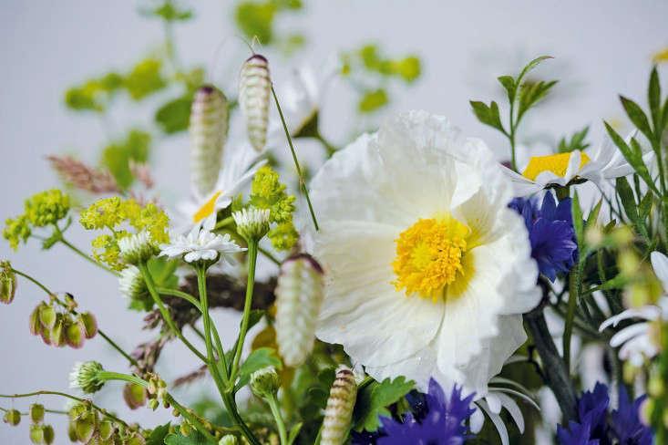 poppy-and-quaking-grass-photo-Jason-Ingram