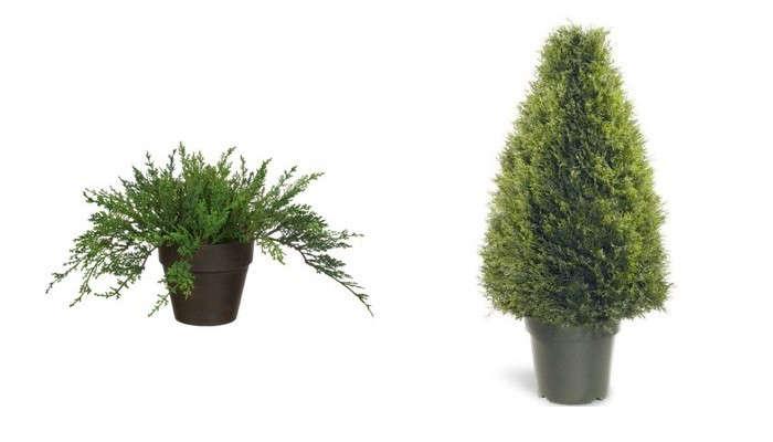 potted-juniper-evergreen-gardenista