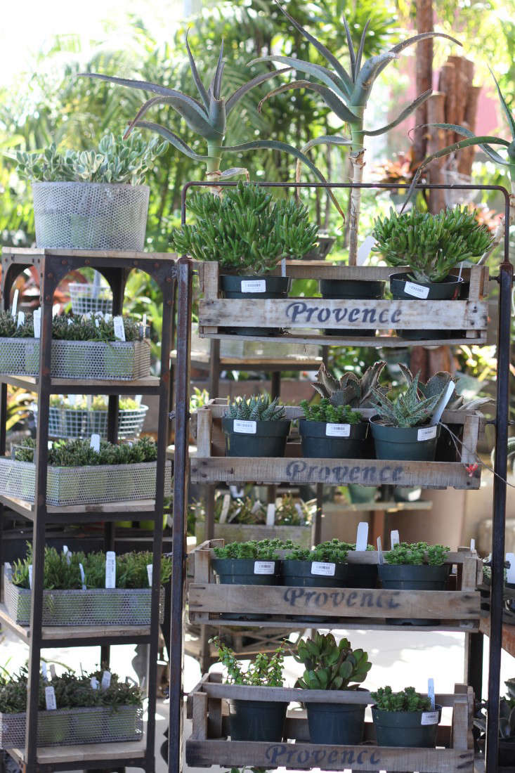 provence-trays-succulents-flora-grubb-gardenista