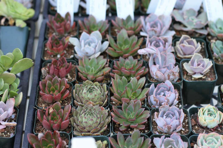 9 secrets to growing succulent plants indoors gardenista Can succulents grow outside