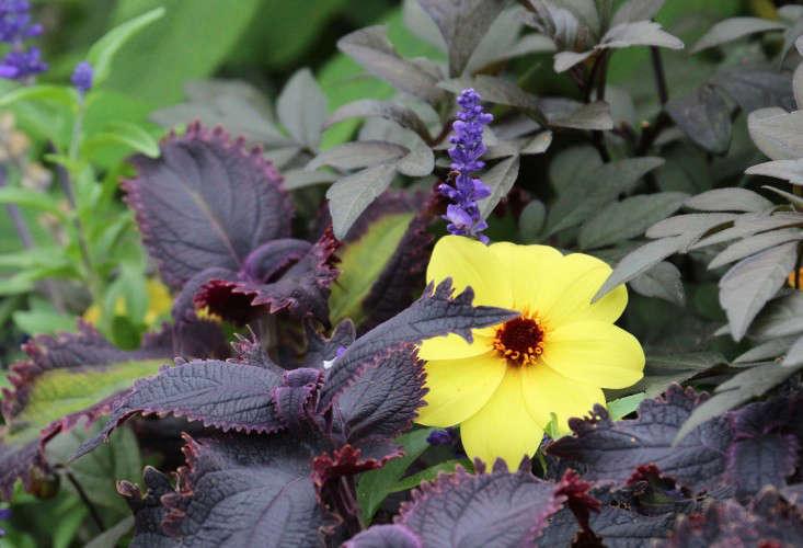 purpleprince-marie-viljoen-gardenista