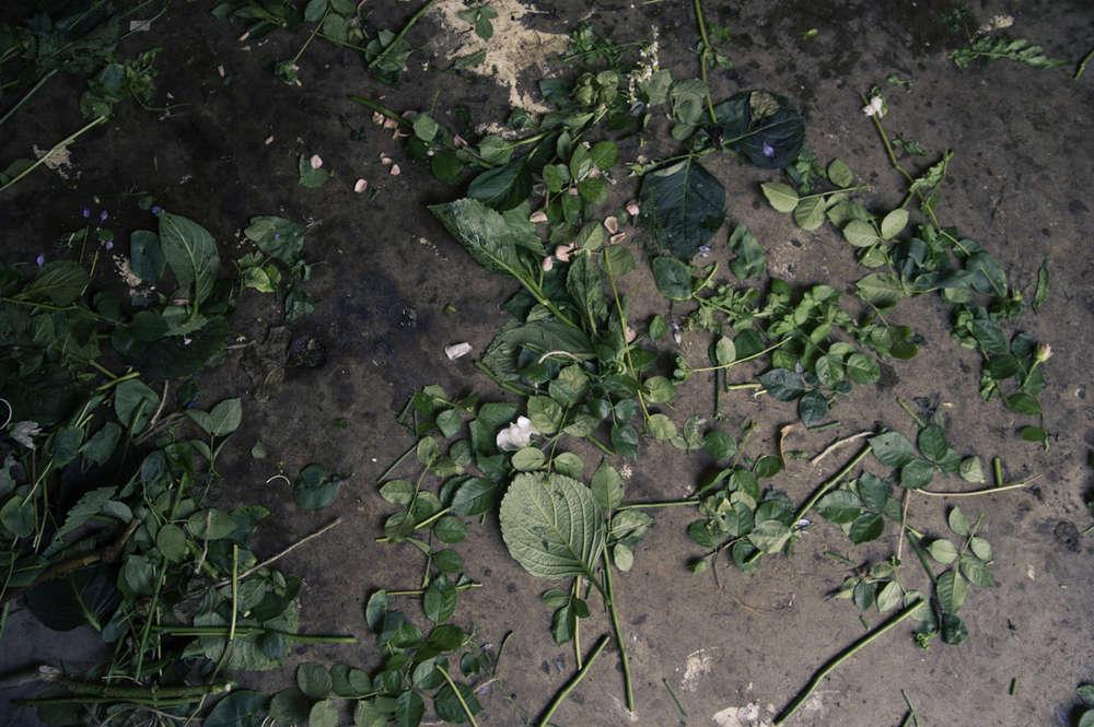 pyrus-uk-leaves