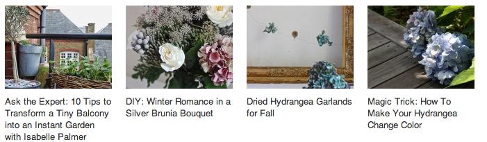 read-more-hydrangea-posts-gardenista