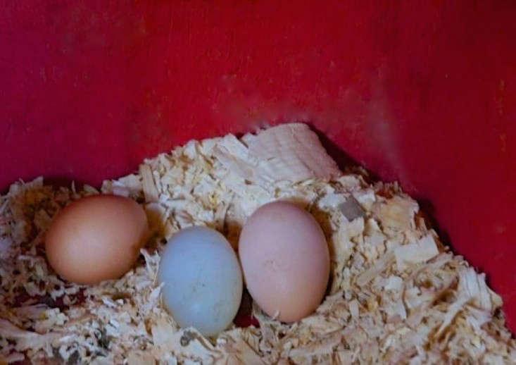 red-chicken-coop-eggs-gardenista