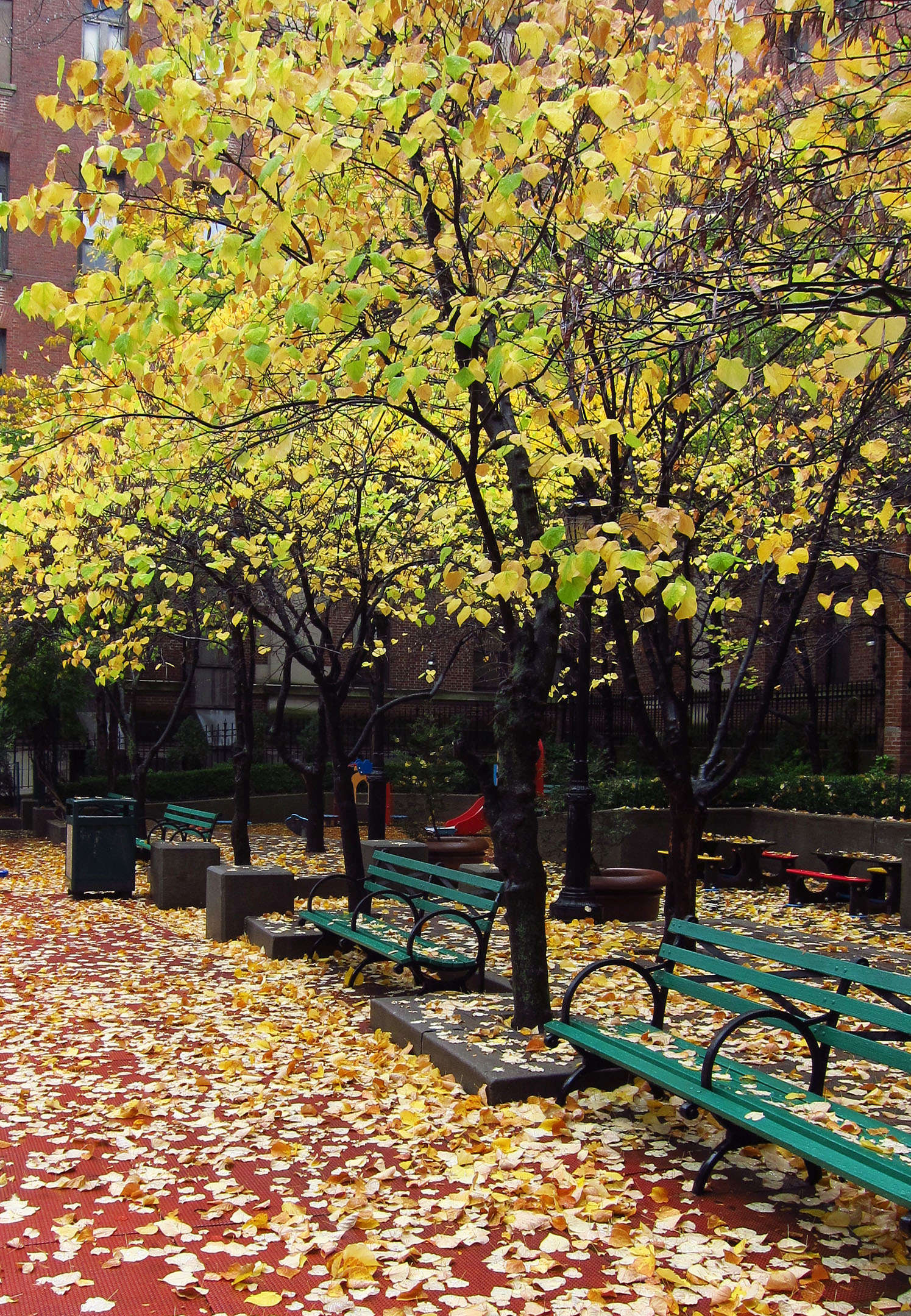 fall foliage 101 why some autumns are more colorful gardenista