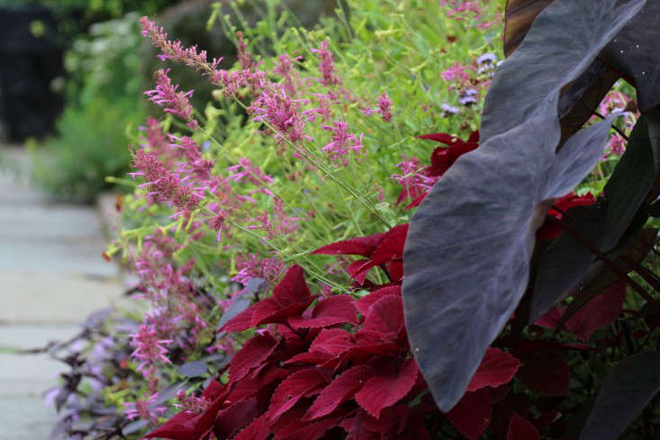redhead-marie-viljoen-gardenista