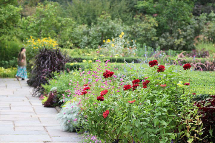 redzinnia-marie-viljoen-gardenista