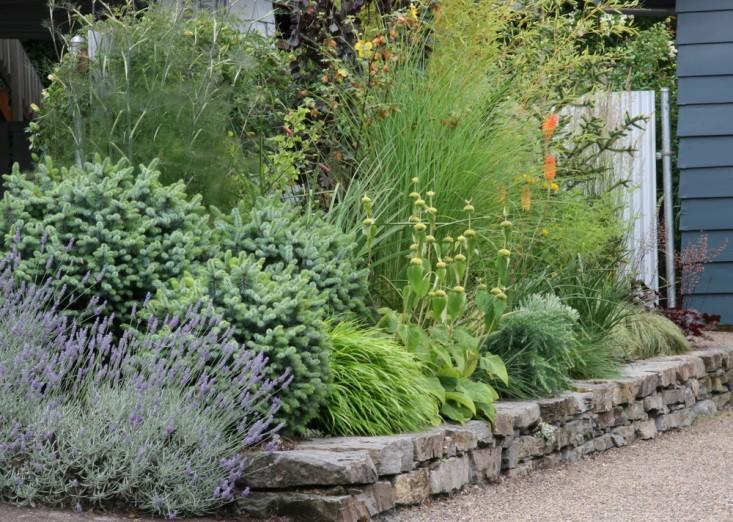 rehab-diary-eugene-oregon-plant-palette-drought-tolerant-perennials-heuchera-lavender-stone-wall-gardenista