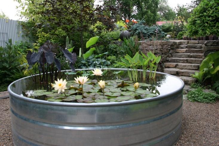 rehab-diary-eugene-oregon-plant-palette-water-lilies-pond-water-featuregardenista