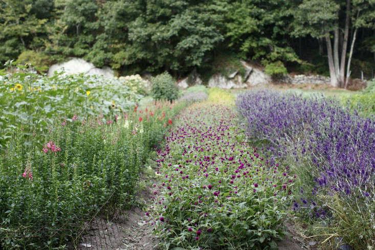 robin-hill-farm-fields-of-flowers-christine-chitnis-gardenista