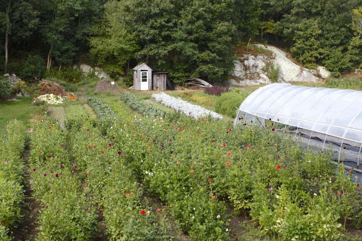 robin-hollow-farm-christine-chitnis-gardenista-dahlias-farm