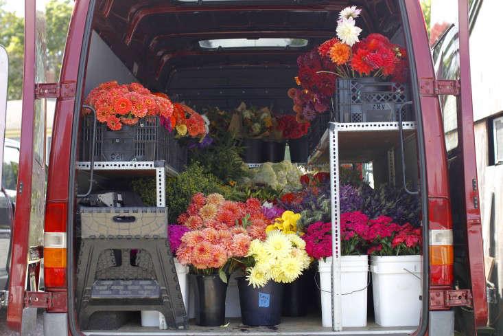 robin-hollow-farm-christine-chitnis-gardenista-dahlias-van