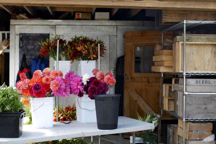 robin-hollow-farm-christine-chitnis-gardenista-flower-stand