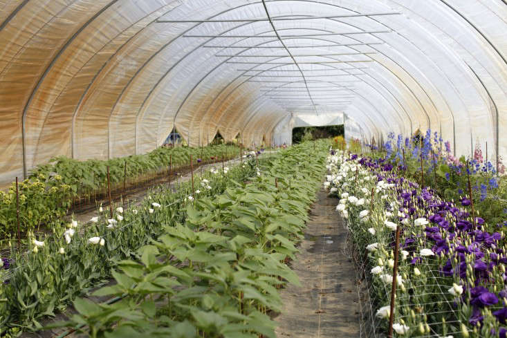 robin-hollow-farm-christine-chitnis-gardenista-greenhouse