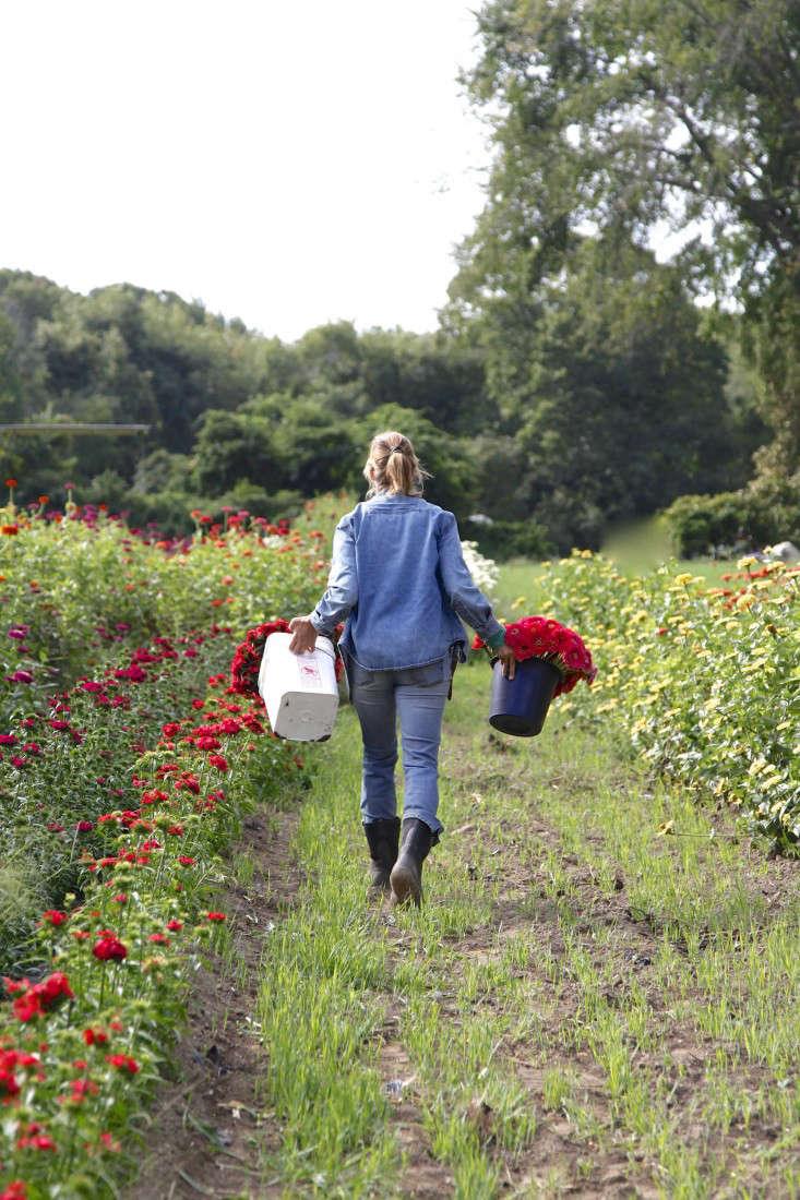 robin-hollow-farm-christine-chitnis-gardenista-red-flower-harvest