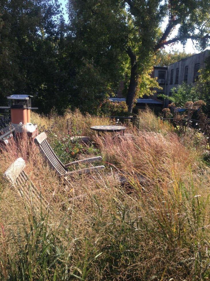 roof-garden-brooklyn-grasses-gardenista