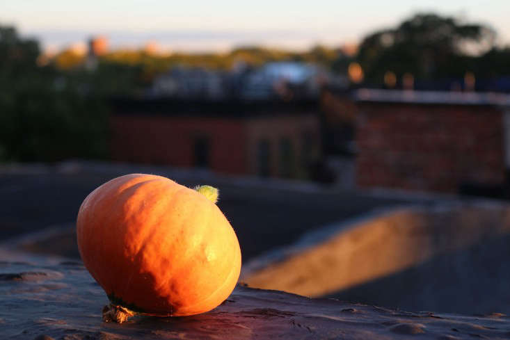 rooftopsquash-Marie-Viljoen-gardenista