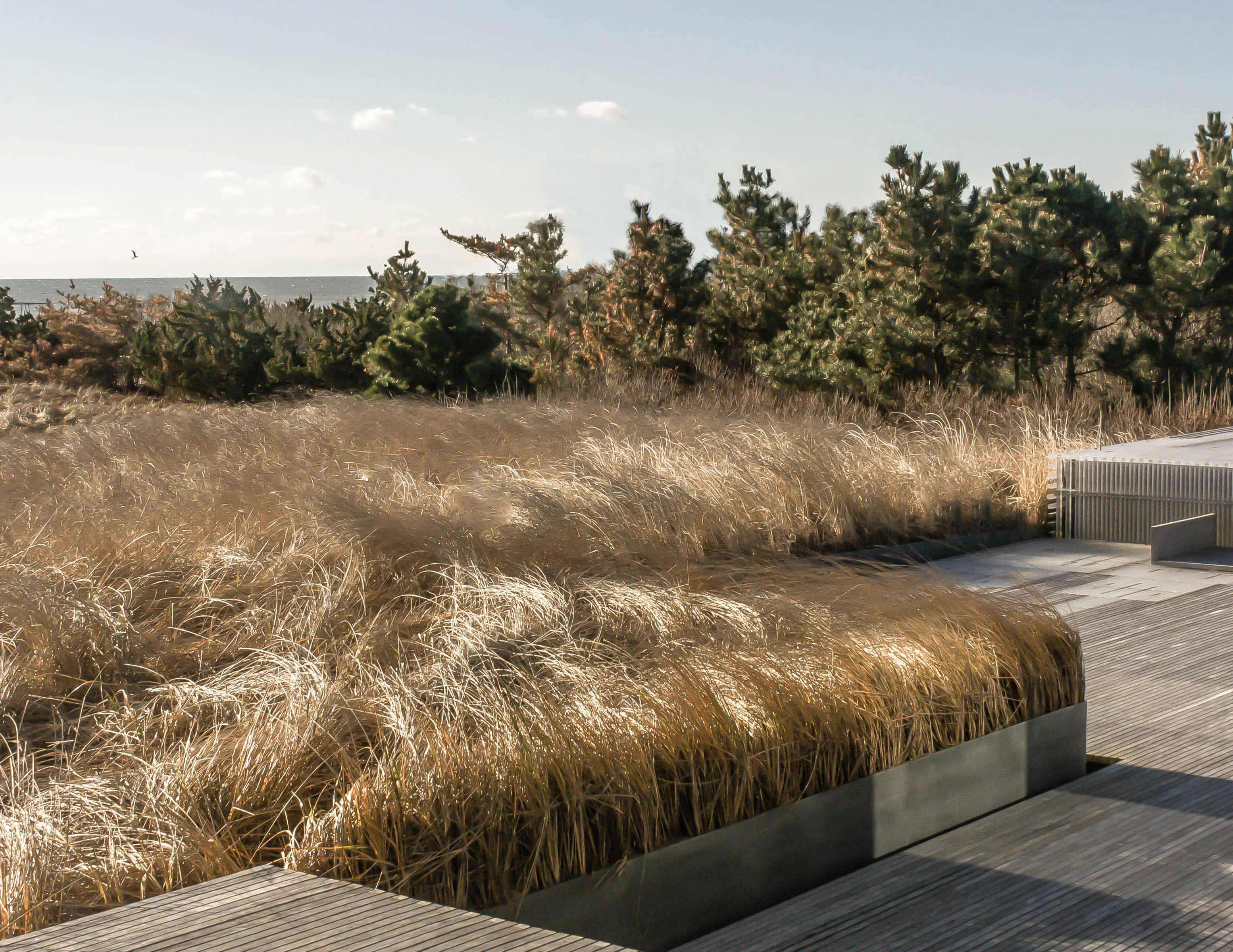 Landscaping Over Sand : Dune story a postmodern masterpiece saved from the sea on