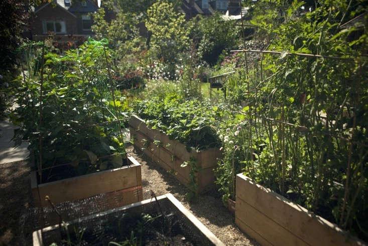 sam-mcknight-london-garden-jim-powell-gardenista-10