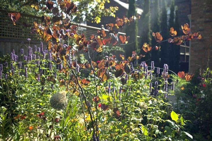 sam-mcknight-london-garden-jim-powell-gardenista-7