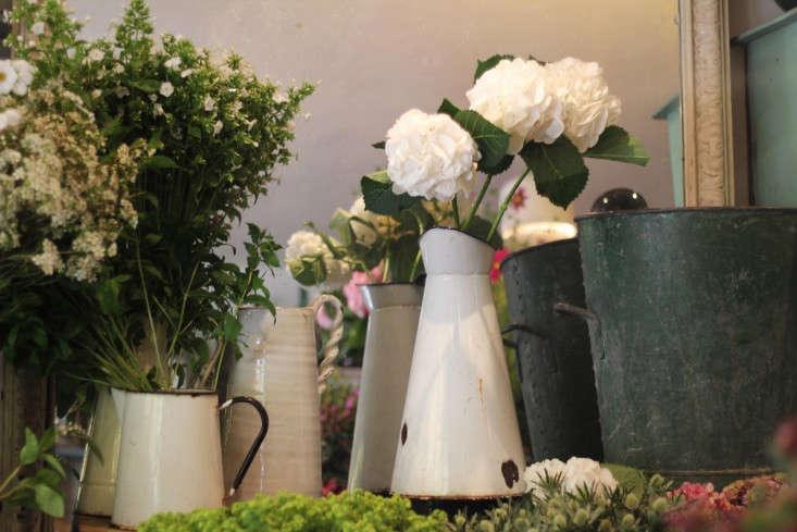 scarlet-and-violet-jugs-hydrangea