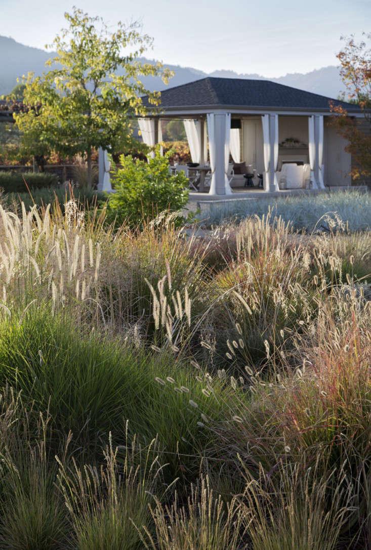 scott-lewis-vineyard-retreat-grasses-northern-california-12-gardenista