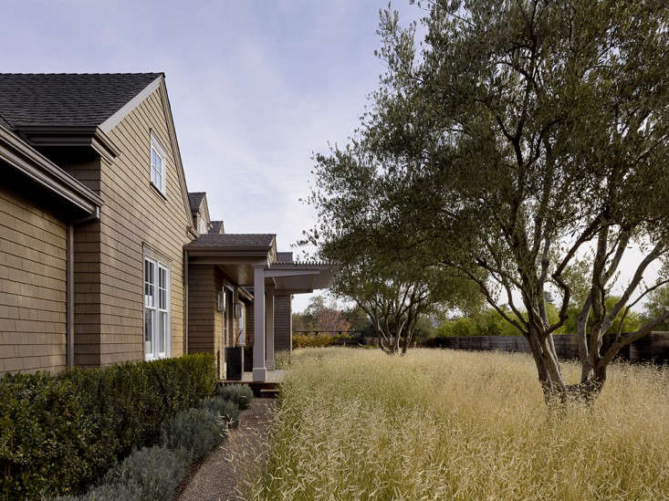 scott-lewis-vineyard-retreat-grasses-northern-california-2-gardenista