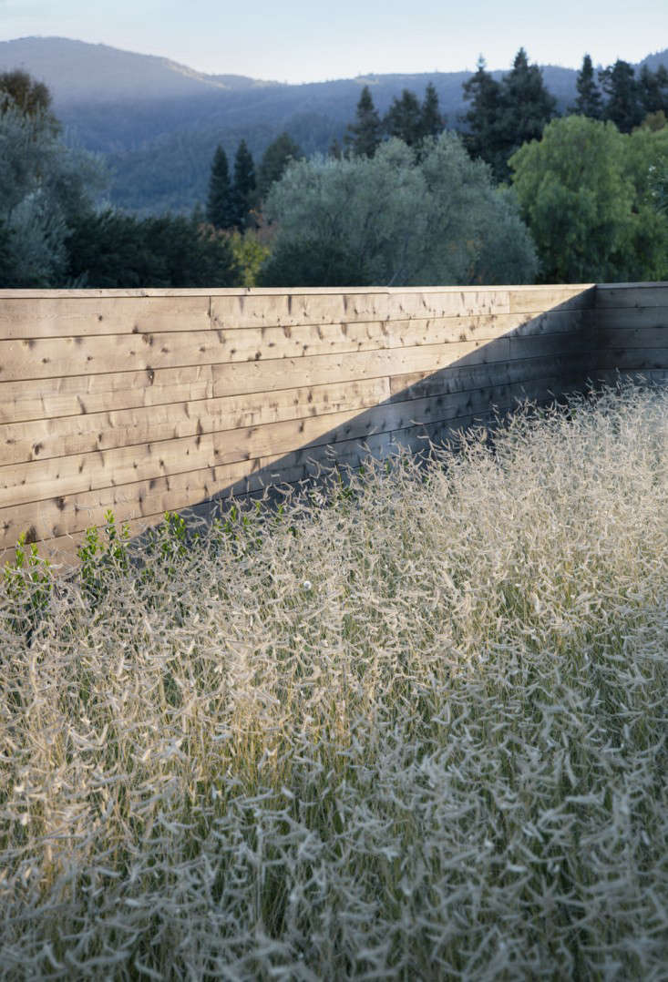 scott-lewis-vineyard-retreat-grasses-northern-california-5-gardenista