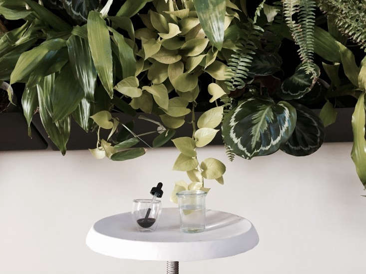 sea-kelp-plant-fertilizer-tonic-vertical-wall-gardenista