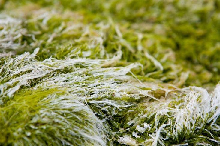 seaweed_tensafefrogs