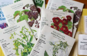 Shiso seed packet ; Gardenista