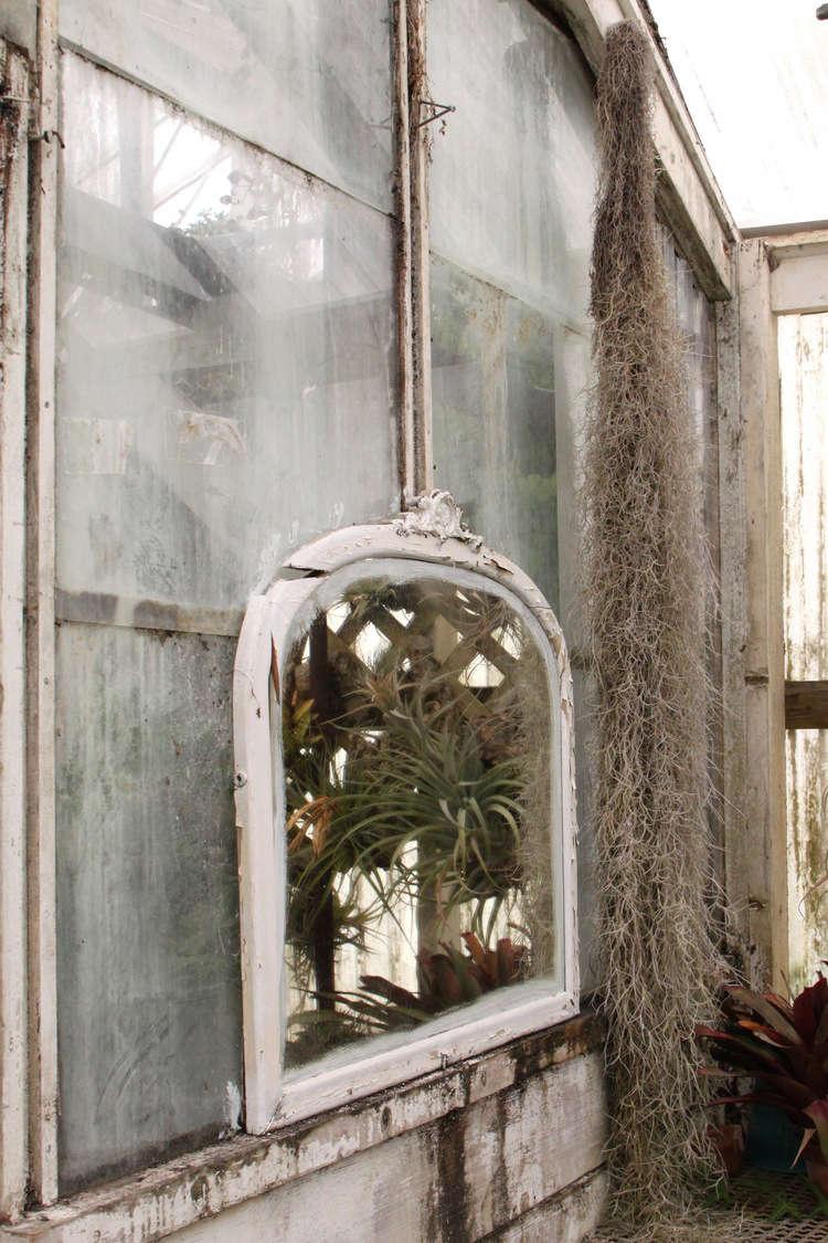 shelldance-orchid-gardens-the-merchant-home-gardenista_01