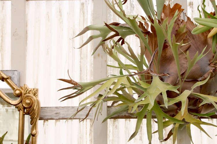 shelldance-orchid-gardens-the-merchant-home-gardenista_05