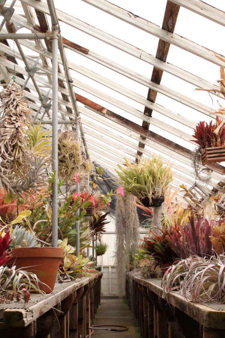 shelldance-orchid-gardens-the-merchant-home-gardenista_06