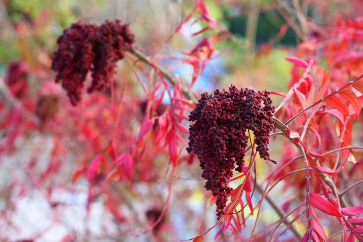 Árboles y arbustos florecientes mantienen caída de colores | El Seattle Times
