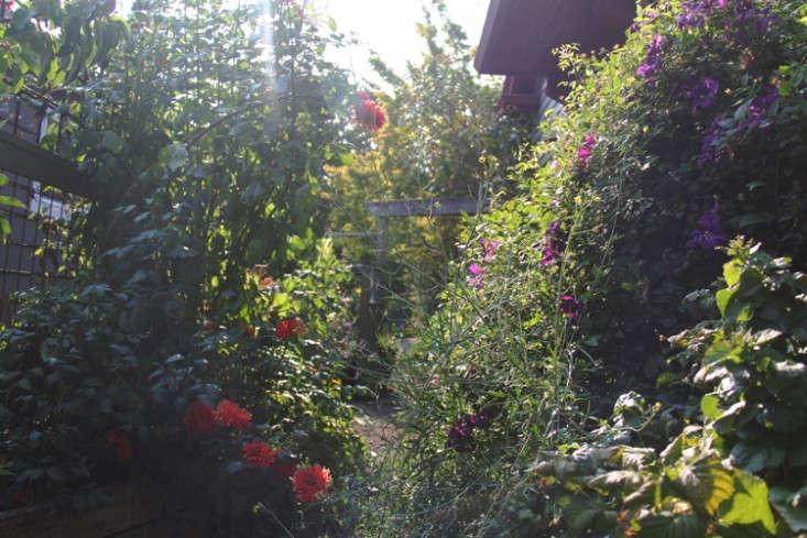 sideyard11_daniels_gardenista