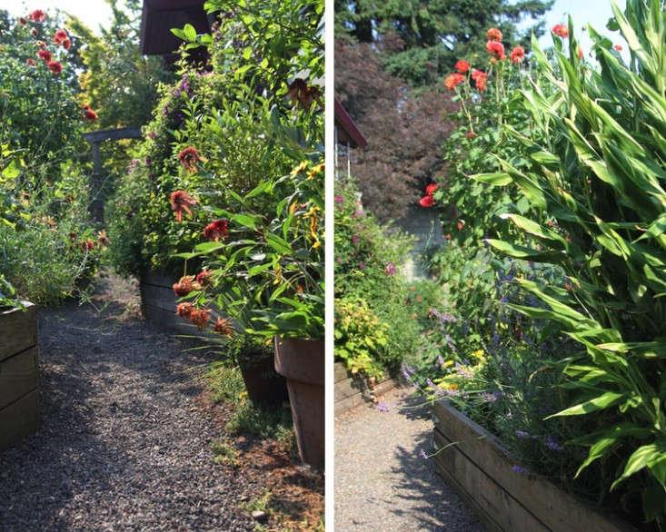sideyard2_daniels_gardenista
