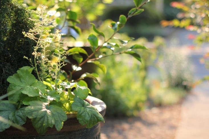 sideyard3_daniels_gardenista