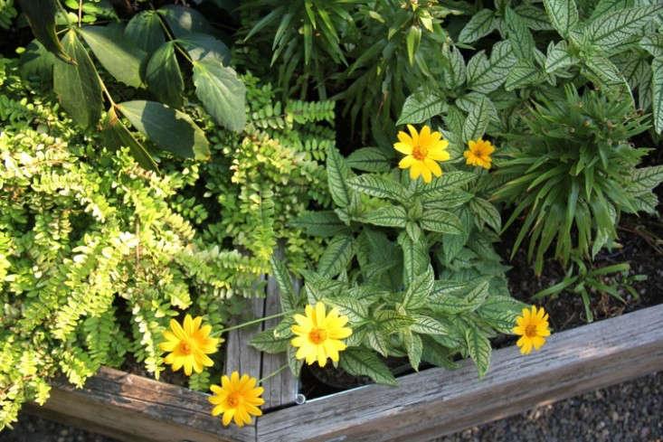 sideyard4_daniels_gardenista