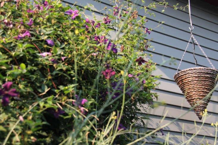 sideyard5_daniels_gardenista