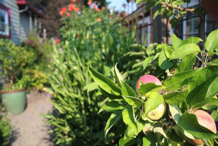 sideyard7_daniels_gardenista