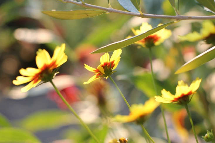 sideyard9_daniels_gardenista
