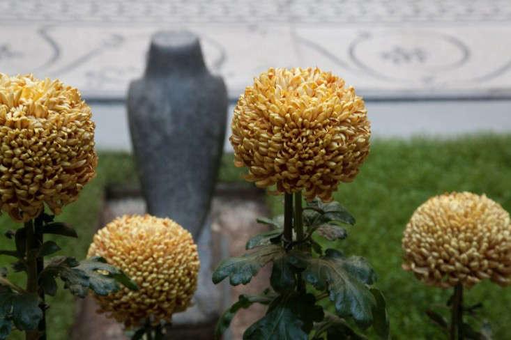 single-stem-chrysanthemums-siena-scarf-isabella-stewart-gardener-museum-gardenista