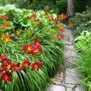 sissinghurst-daylilies-path