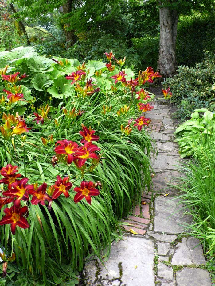 sissinghurst-daylilies-path
