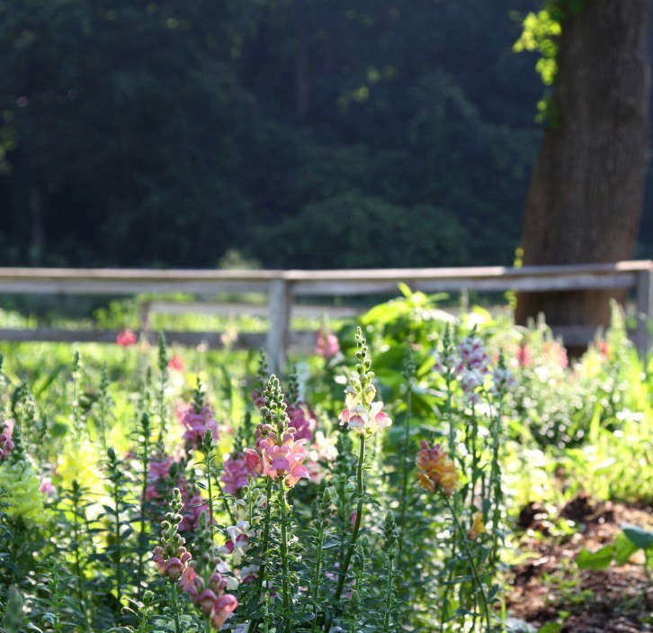 12 tips for growing cutting flowers from barberry hill for Flower hill farms