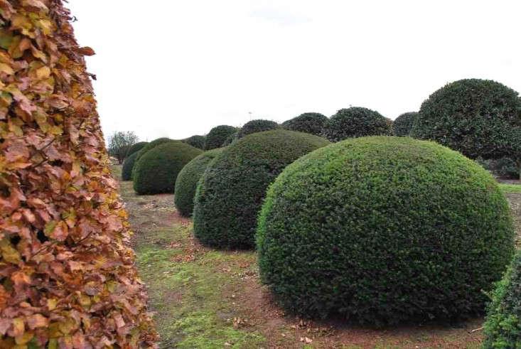 solitair-taxus-baccata-ball-shrub-gardenista
