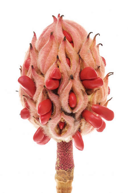 southern-magnolia-seeing-seeds-gardenista copy