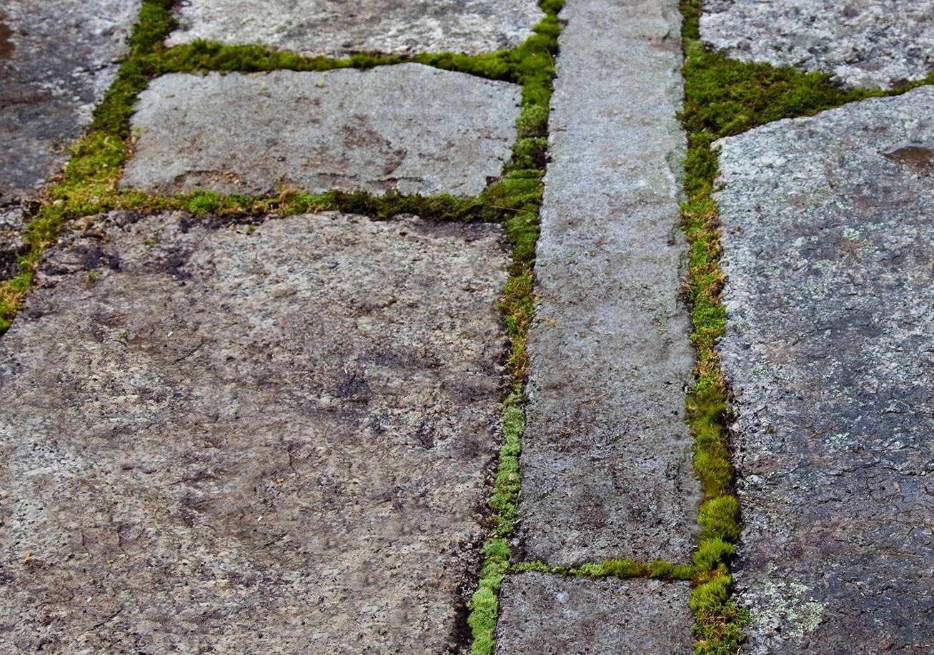 southwest-harbor-maine-garden-matthew-cunningham-6-gardenista